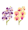 branches orchid phalaenopsis yellow and spotted vector image