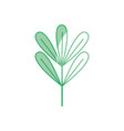 silhouette natural plant with botanic leaves vector image vector image