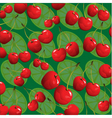 cherries and lime green background vector image vector image