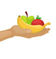 hand holding ripe fruits apples and banana for vector image