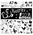 Poultry drawings and icons vector image vector image
