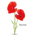 3d realistic red poppies flowers isolated white