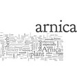 arnica vector image vector image