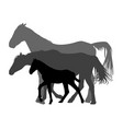 silhouettes of horses family isolated on white vector image vector image