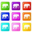 wild elephant set 9 vector image vector image