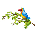 a colorful parrot vector image