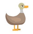 duck cute bird on white background flat vector image