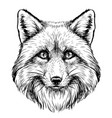 fox graphic sketch hand-drawn portrait vector image vector image