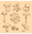 Isolated forest mushrooms sketches set vector image