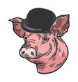 pig animal in bowler hat sketch color engraving vector image vector image