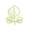 silhouette natural leaves botany of tropical plant vector image vector image