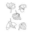 cyclamens pen drawing vector image vector image