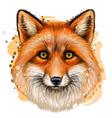 fox sketchy color portrait with red fur vector image vector image