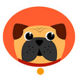 funny pug on white background vector image vector image
