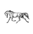 horse run gallop on a white background hand drawn vector image vector image