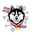 husky head dog woof bone paw design vector image vector image