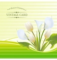 White tulip spring flowers bouquet for sale vector image vector image