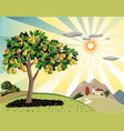 orchard with pear trees vector image vector image