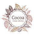 banner with cocoa beans and plants vector image vector image