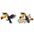 cartoon funny toucan collections vector image