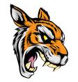 tiger mascot character vector image vector image