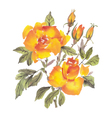 Watercolor flowers Roses vector image