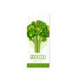 creative hand drawn label with broccoli healthy vector image vector image