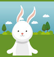 cute rabbit in the field landscape character vector image