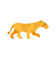 dangerous cat lioness or wildlife animal vector image