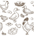 farm with geese and hens rooster and eggs pattern vector image