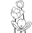 Flowers tulips vector image