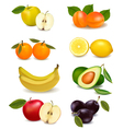 group with different sorts of fruit vector image vector image