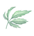 watercolor green leaf plant decoration on white vector image vector image