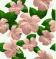 hibicus flowers pattern 6 vector image vector image