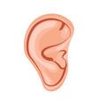 human ear icon vector image vector image