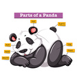Panda and different parts of the body vector image vector image