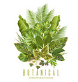 tropical plants banner vector image vector image