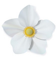 white narcissus flower isolated on white vector image