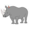 adult rhinoceros on white background vector image vector image