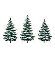 christmas fir trees vector image vector image