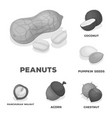 different kinds of nuts monochrome icons in set vector image vector image