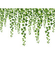 green ivy hanging from above creepers vector image