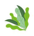 leaves foliage nature vegetation botanical vector image vector image