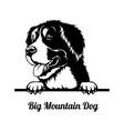 peeking dog - big mountain dog breed - head vector image vector image
