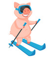 skiing activity of piglet symbolic animal of new vector image