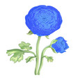 beautiful blue flower peony isolated on white vector image vector image