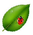 ladybird on leaf vector image vector image