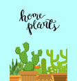 with cacti in pots in flat vector image vector image
