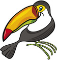 cartoon illustration of funny toucan vector image