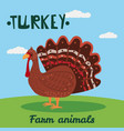 cute turkey farm animal character farm animals vector image vector image